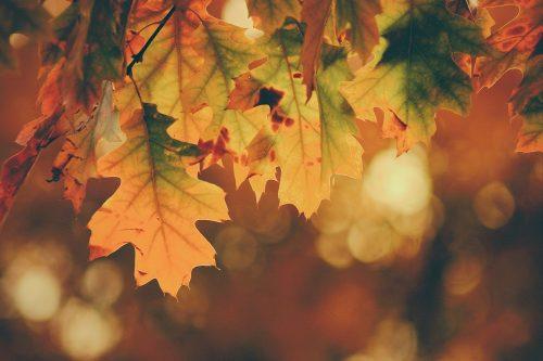Autumn Colours Mindfulness Course St Albans
