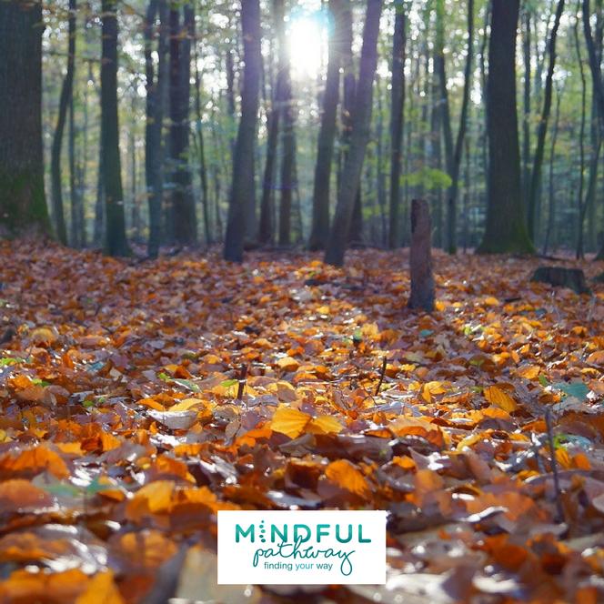 Autumn Mindfulness course St Albans